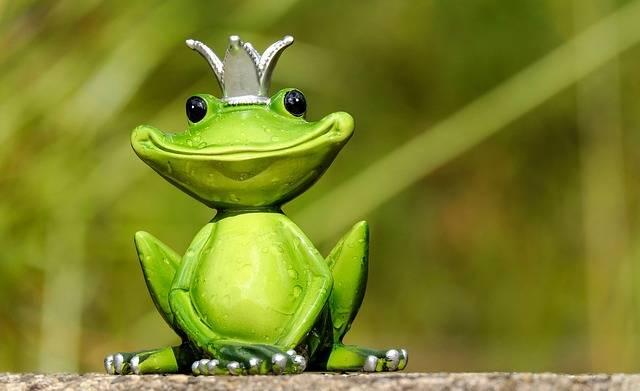 Frog Prince - Free photo on Pixabay (408214)