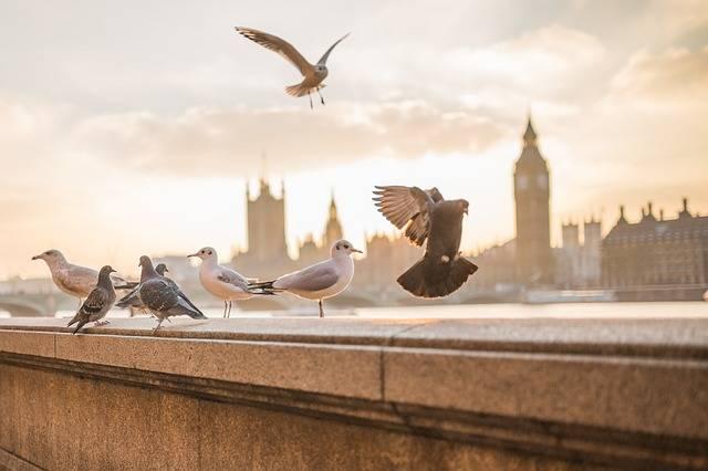 Animals Birds Nature - Free photo on Pixabay (410111)