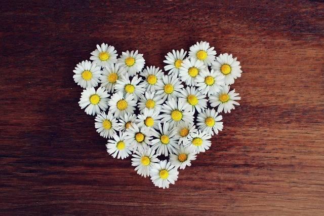 Daisy Heart - Free photo on Pixabay (411885)