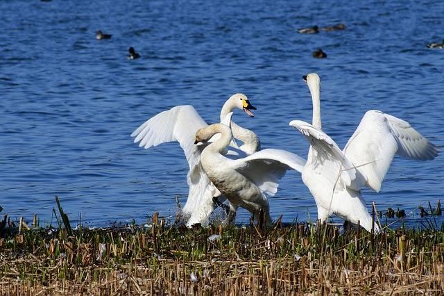 Animal Lake Japan - Free photo on Pixabay (413472)
