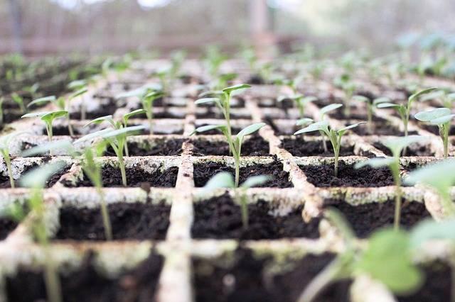 Brazil Plants Changes - Free photo on Pixabay (415625)