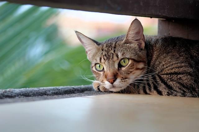 Cat Kitty Pet - Free photo on Pixabay (416791)