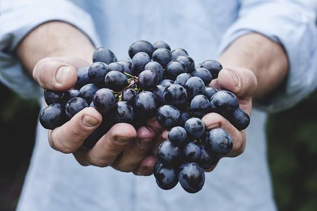 Grapes Bunch Fruit - Free photo on Pixabay (418263)
