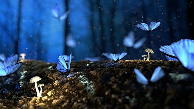 Butterfly Blue Forest - Free photo on Pixabay (418599)