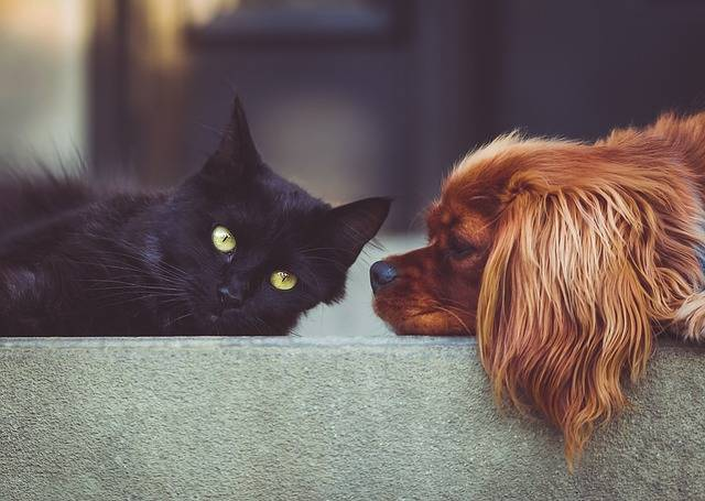 Dog Cat Pets - Free photo on Pixabay (419592)