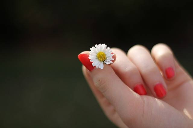 Hand Daisy Flower - Free photo on Pixabay (431946)