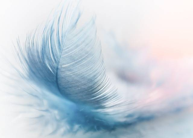 Feather Ease Slightly - Free photo on Pixabay (432803)