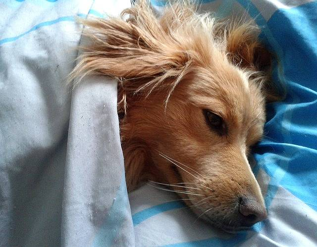Dog Animal Favorite - Free photo on Pixabay (436119)