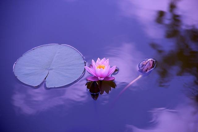 Lotus Natural Water - Free photo on Pixabay (437077)