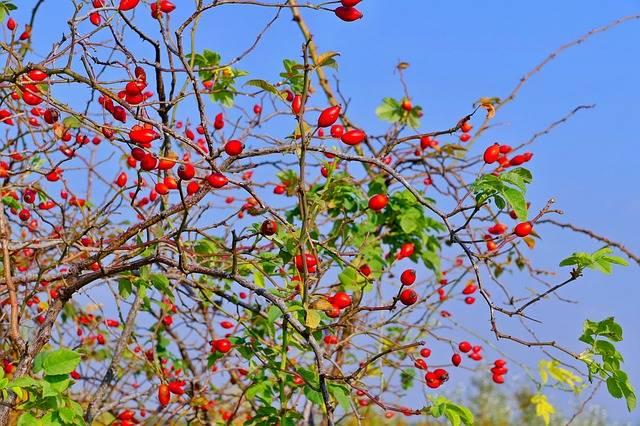 Darts Ker Red - Free photo on Pixabay (438044)