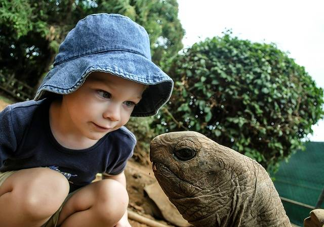 Boy Turtle Watching - Free photo on Pixabay (438836)