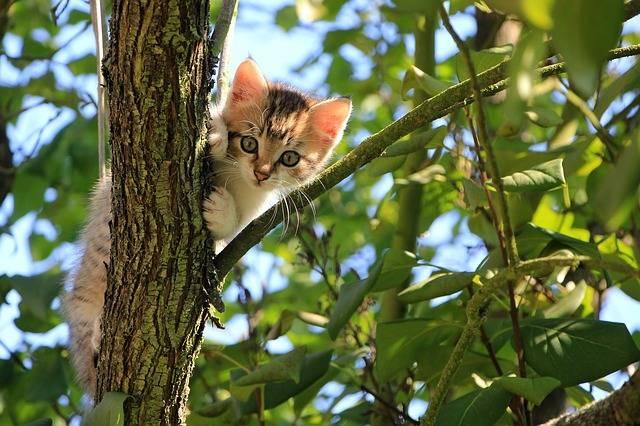 Cat Kitten Tree - Free photo on Pixabay (441820)