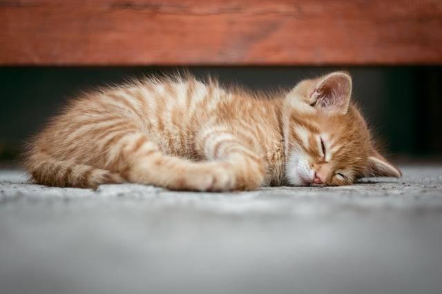 Cat Kitten Cute - Free photo on Pixabay (441821)