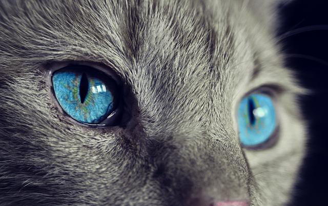 Cat Animal Cat'S Eyes - Free photo on Pixabay (444084)