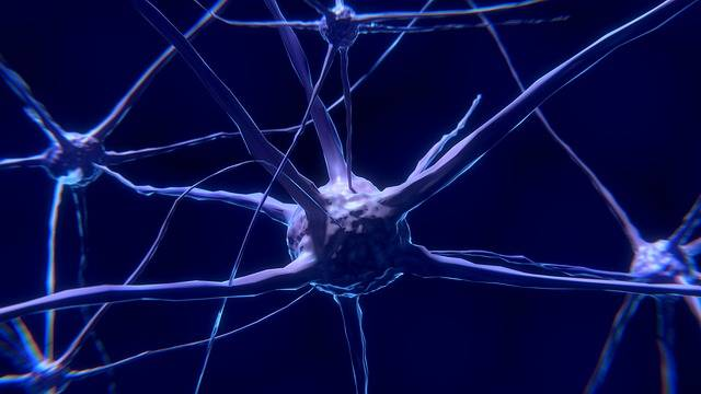 Nerve Cell Neuron Brain - Free image on Pixabay (446212)