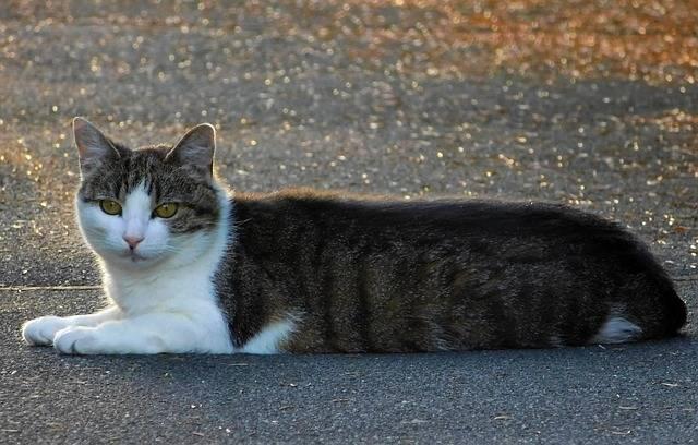 Cat Mieze Cute - Free photo on Pixabay (446863)