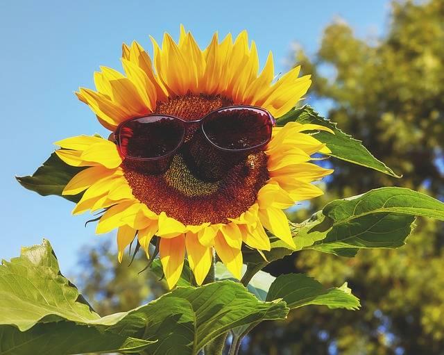 Glasses Sunglasses Sun - Free photo on Pixabay (450458)