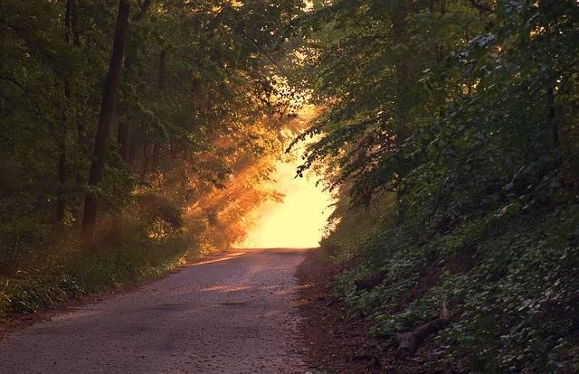 Sunlight Forest Way - Free photo on Pixabay (454472)