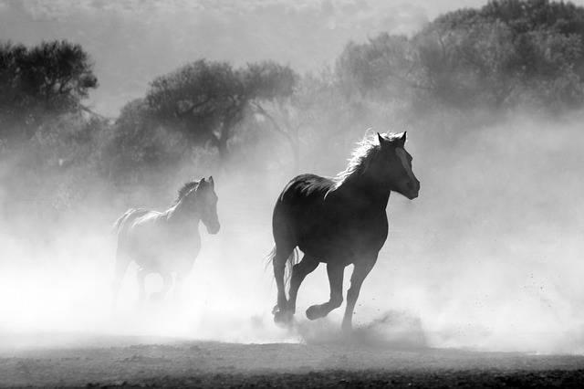 Horse Herd Dust - Free photo on Pixabay (454510)