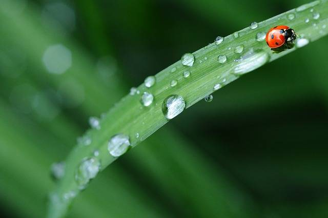 Ladybug Drop Of Water Rain - Free photo on Pixabay (455922)