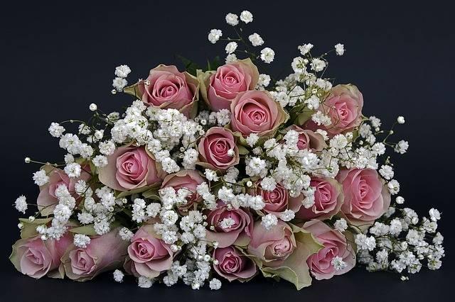 Roses Rose Flower Flowers - Free photo on Pixabay (457006)