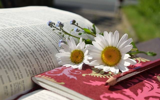 Daisies Book Read Writing - Free photo on Pixabay (460767)