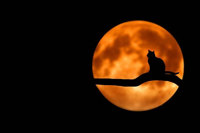 Tree Cat Silhouette - Free photo on Pixabay (461014)