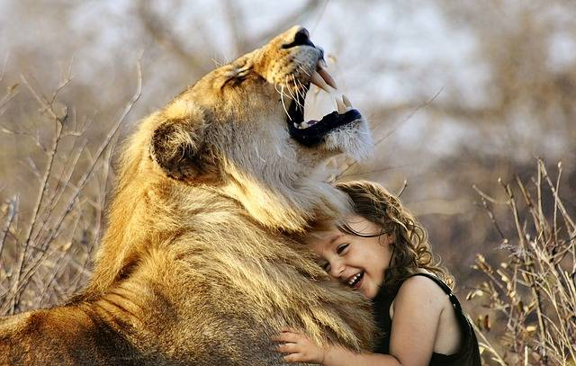 Lion Roar Africa - Free photo on Pixabay (462584)