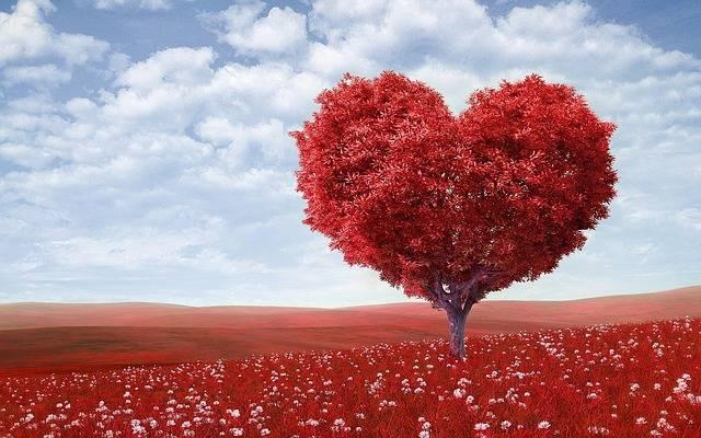 Heart-Shape Tree Red - Free photo on Pixabay (463499)