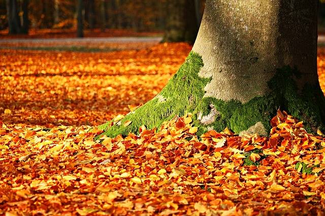 Fall Foliage Moss Tree - Free photo on Pixabay (463530)