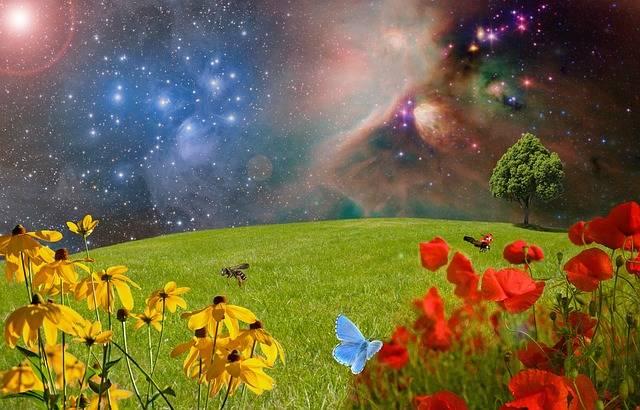Meadow Green Flower - Free photo on Pixabay (464250)