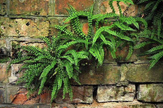 Plant Plants Green - Free photo on Pixabay (464897)