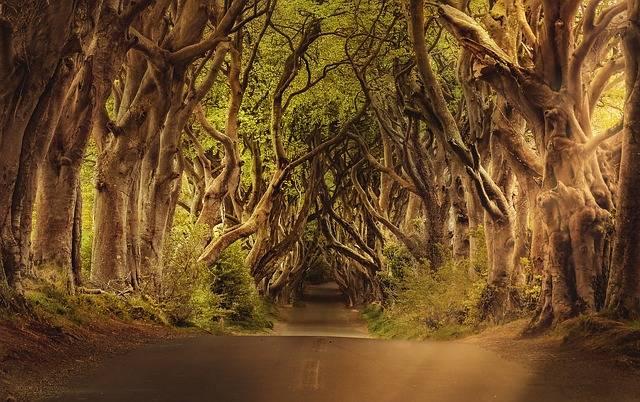 Trees Road Northern Ireland - Free photo on Pixabay (464898)