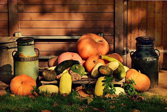 Pumpkin Vegetable Food - Free photo on Pixabay (464912)