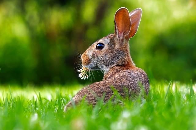 Rabbit Hare Animal - Free photo on Pixabay (466292)