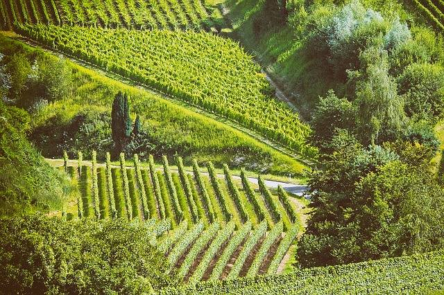 Landscape Summer Vines - Free photo on Pixabay (467400)