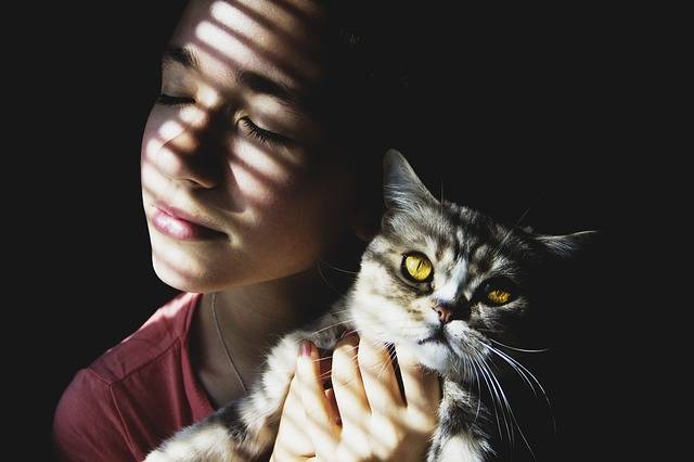 Girl Cat Beauty - Free photo on Pixabay (468103)