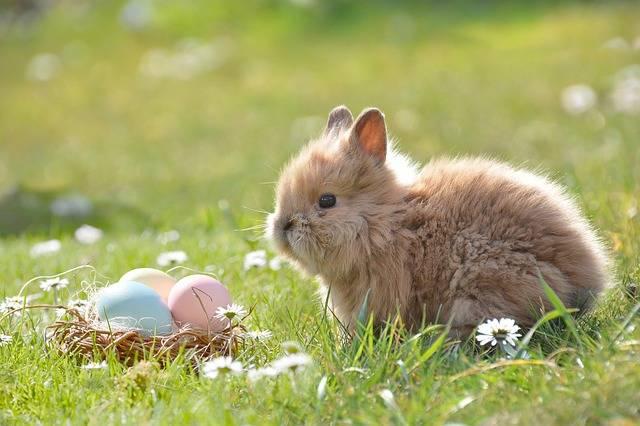 Easter Bunny Egg - Free photo on Pixabay (468491)