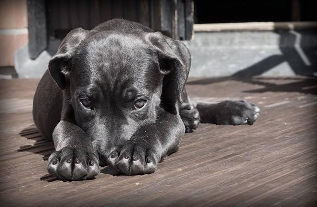 Pet Dog Puppy - Free photo on Pixabay (469684)