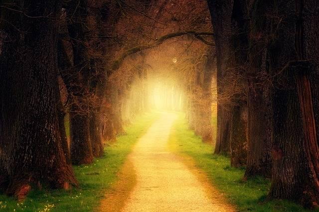 Tree Forest Path - Free photo on Pixabay (470276)
