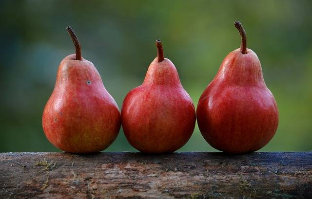 Pears Red Branch Pyrus - Free photo on Pixabay (470890)