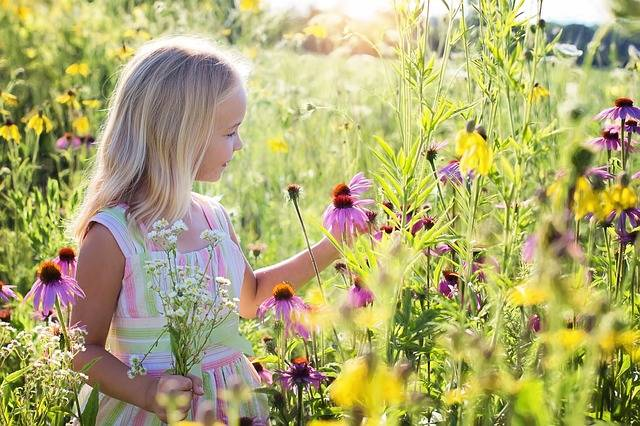 Little Girl Wildflowers Meadow - Free photo on Pixabay (478655)