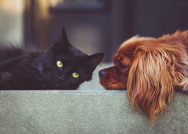 Dog Cat Pets - Free photo on Pixabay (481770)