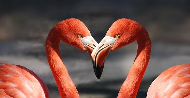 Flamingo Valentine Heart - Free photo on Pixabay (483527)