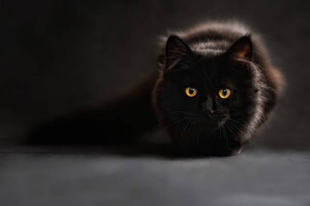 Cat Silhouette Cats - Free photo on Pixabay (490060)