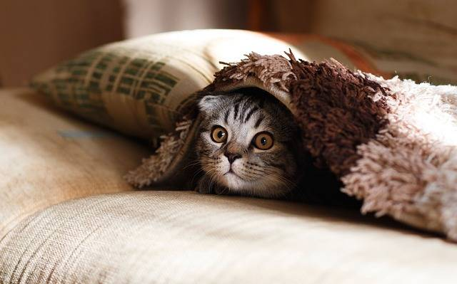Pillow Case Blanket - Free photo on Pixabay (502273)