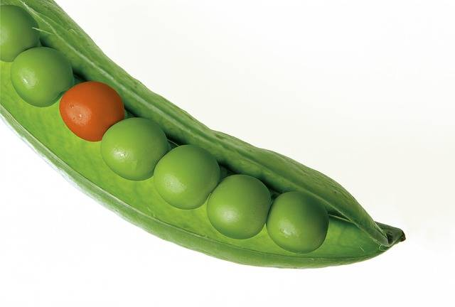 Peas Pod Pea - Free photo on Pixabay (503109)