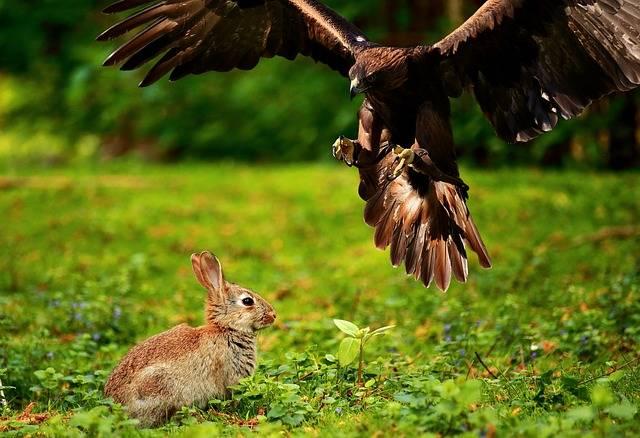 Adler Bird Of Prey Raptor - Free photo on Pixabay (506087)