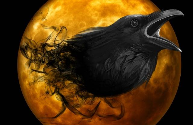Raven Crow Night - Free image on Pixabay (506319)