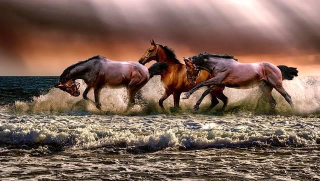 Animal Horses Fauna - Free photo on Pixabay (509901)